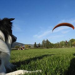 Okanagan Tandem Paragliding_Vernon_BC.jpg