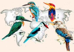 Kingfishers in the World