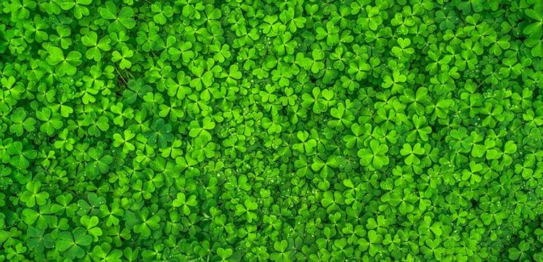 Treffle irlandais Good Morning Irlande Pertuis