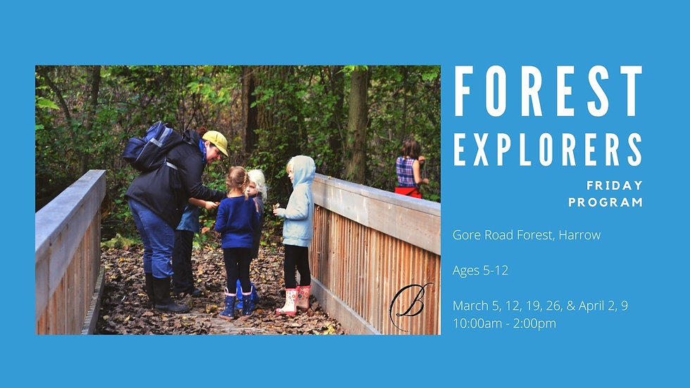 Forest Explorers - Friday Program