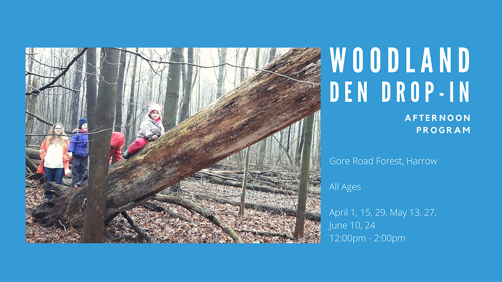 Woodland Den Drop-In (Afternoon Program)