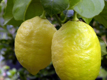 Produce Spotlight: Lemons