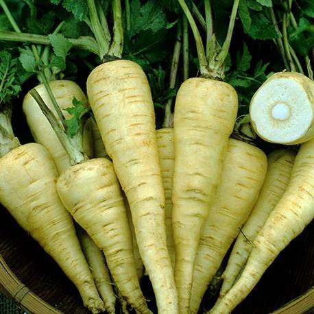 Produce Spotlight: Parsnips