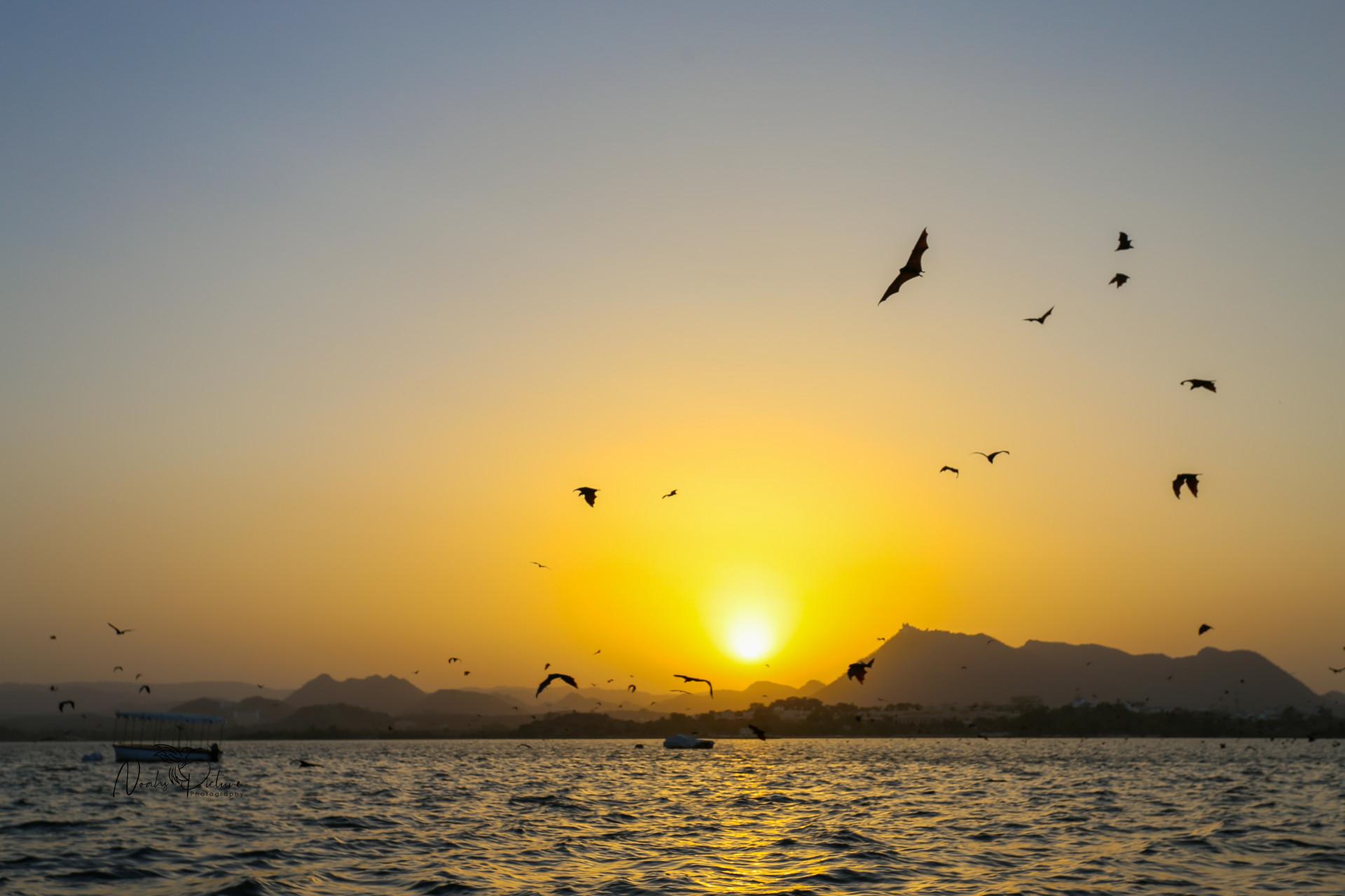 Flying Sunset.jpg