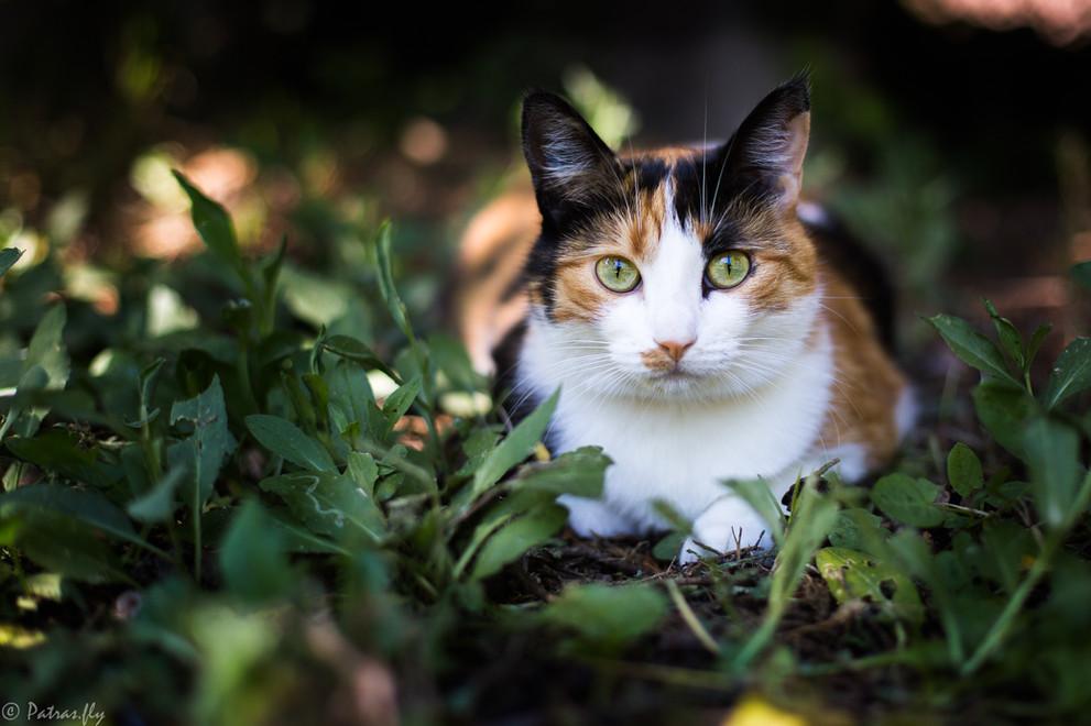 chat jardin - pet's life - franck patras photographe -fly studio