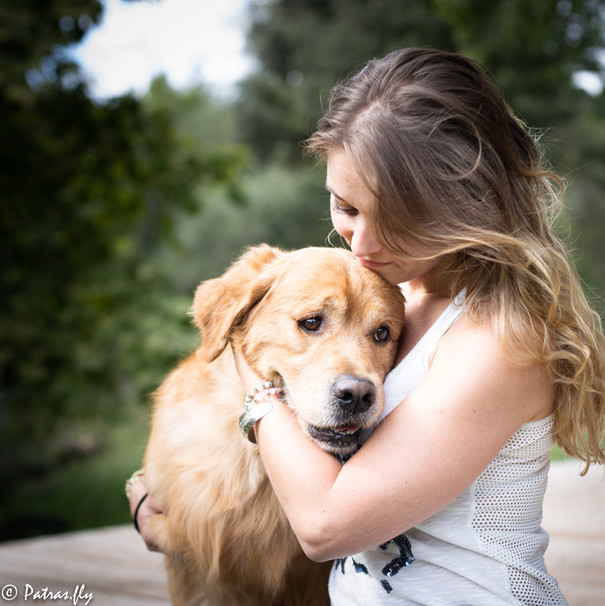 pet's life golden retriever