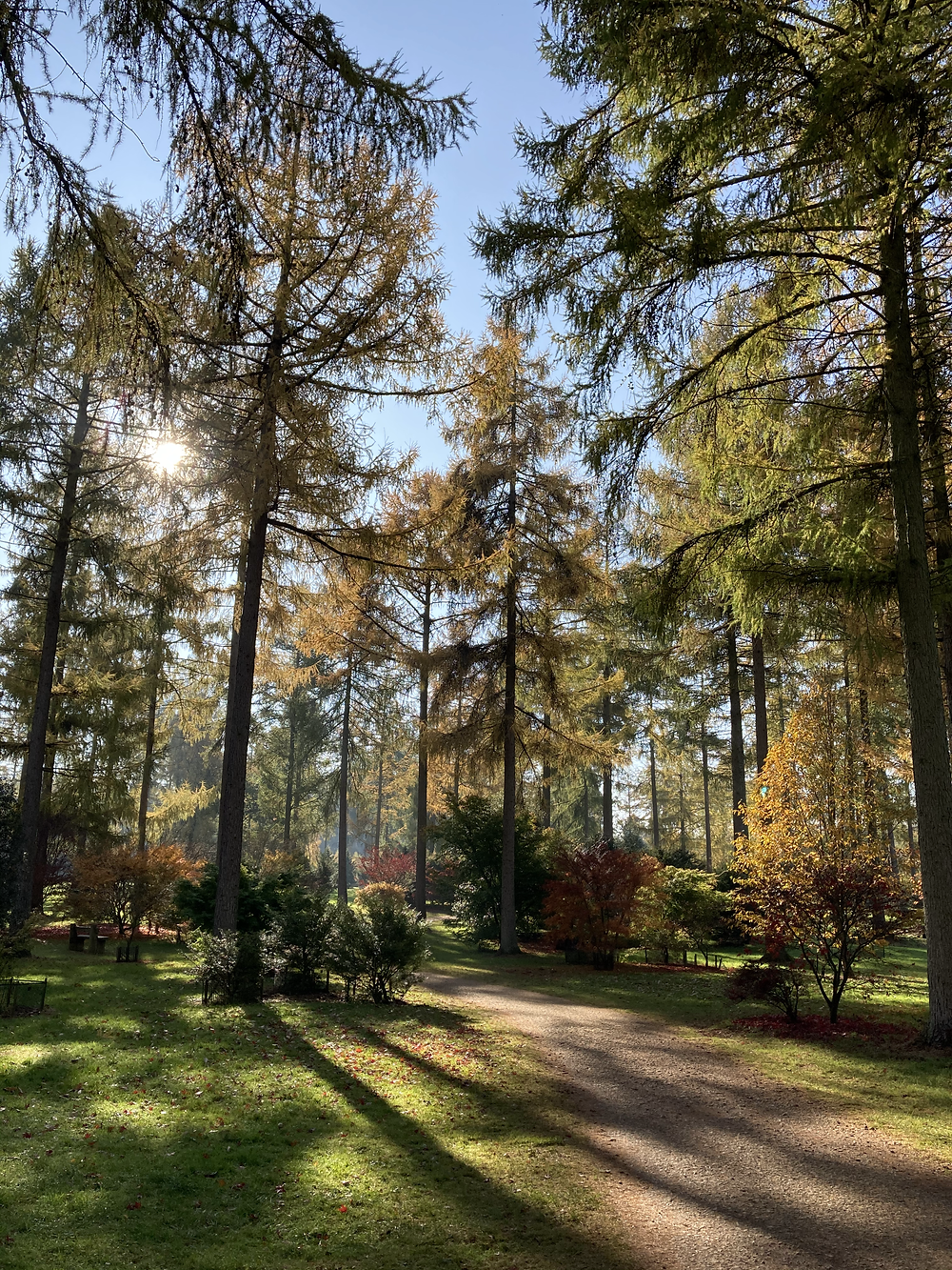 westonbirt in autumn