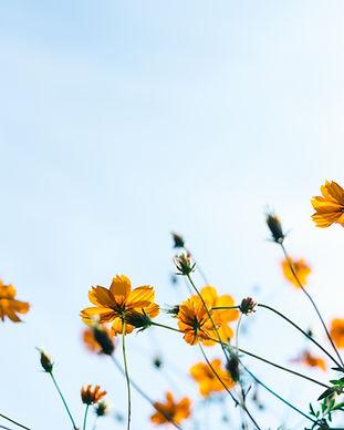 fleurs sauvages ateliers troubles du comportement alimentaire nantes
