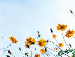 Was du über Allergien & Unverträglichkeiten wissen solltest