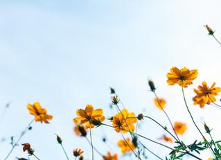 20.09.20 празднуется 15 воскресенье после Троицы.