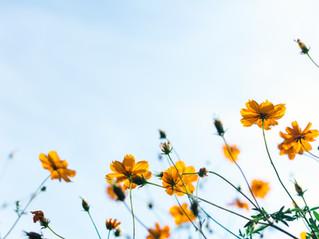 6 Tipps bei Allergien & Unverträglichkeiten
