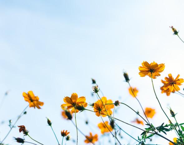 植物は太陽に向かって気持ちよく伸びます  自然の中へ行ったり花や植物、木々に触れると この植物たちが出してくれている新鮮な空気を 体の隅々まで届けたい  そんな気持ちになります