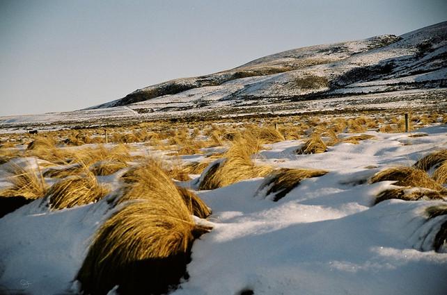 St Bathans-snow-tussock.jpg
