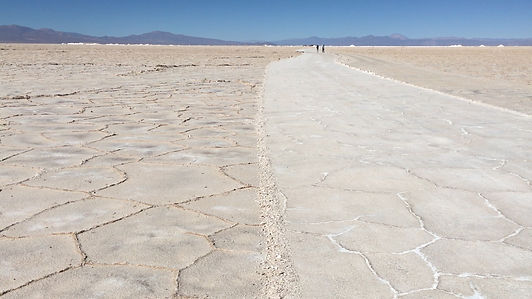 lithium leaves drout.jpg