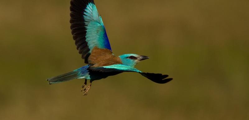 birding in extremadura