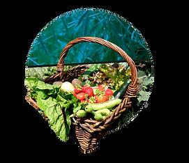 Decohof, Kwekerij, Pluktuin, Boerderijwinkel, biologisch, natuurlijk