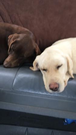 Maggie & Sadie