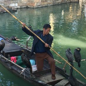 Cormorant Fishing in Tongli