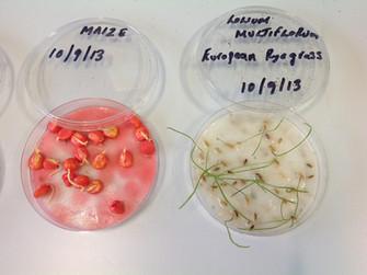 plant seeds for phytoremediation.JPG