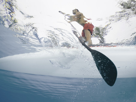 Surf's SUP! Mastering the Basics of Stand Up Paddle Boarding