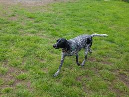 Huntingdon Hounds meet Mutt Meadow