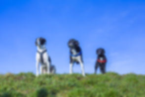 Dog Walker in St Ives and Hemingford Grey, Cambridgeshire