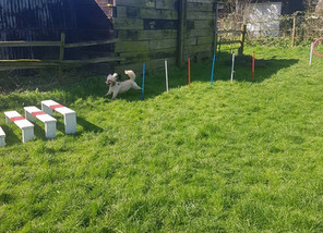 New Agility Equipment in Mutt Meadow