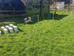New Agility Equipment in Mutt Meadow