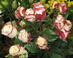 7 - 'Sweetness' Roses