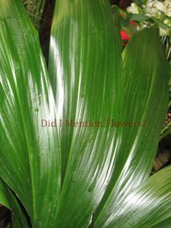 6 - Aspedestria Leaves