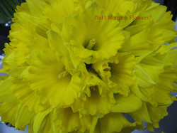 10 - Daffodils in a Vase
