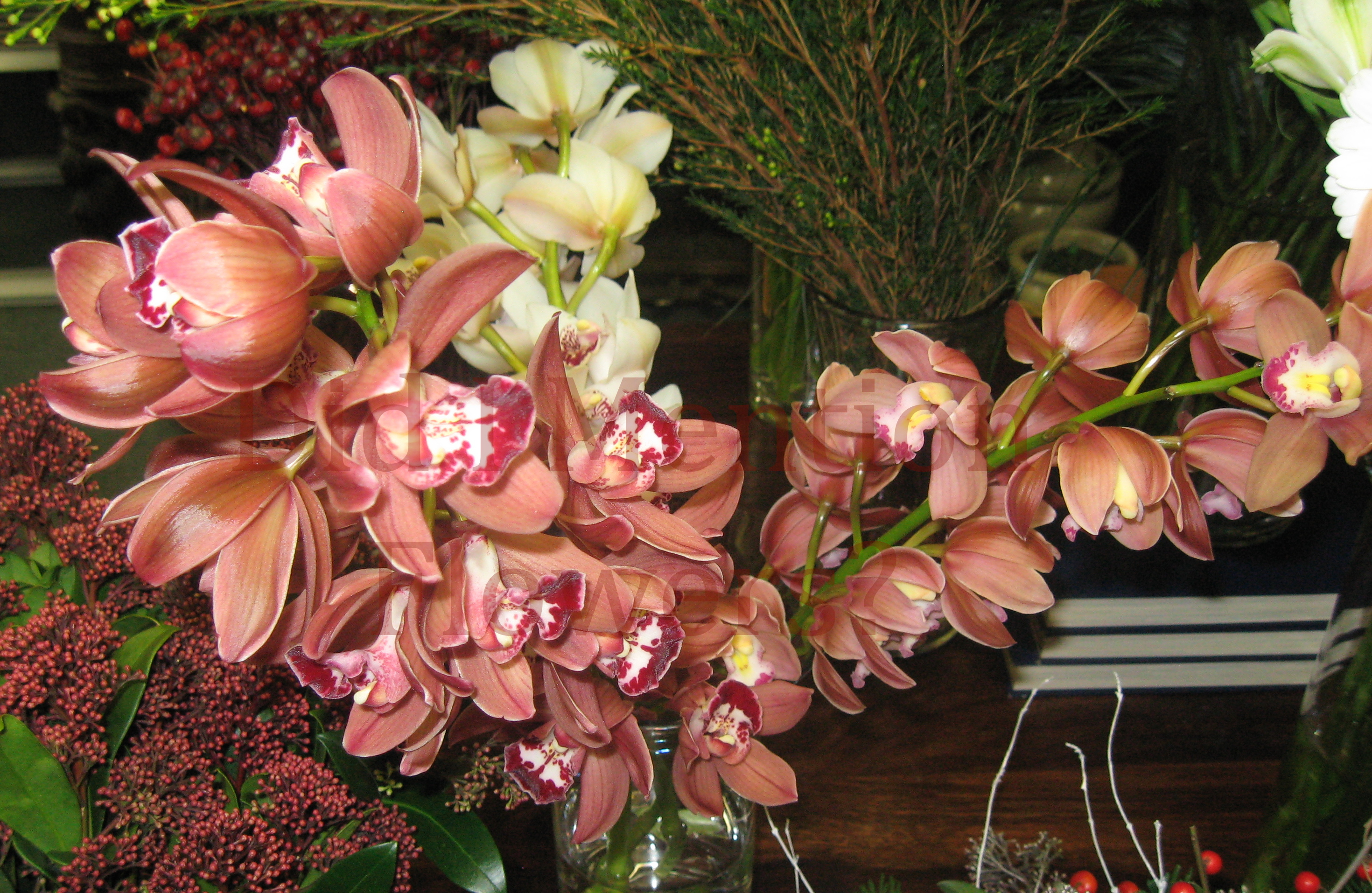 8 - Mini Cymbidium Orchids