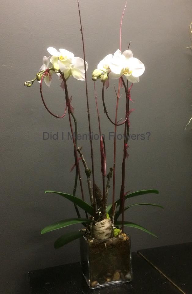 2 - Phalaenopsis Orchids in Vase