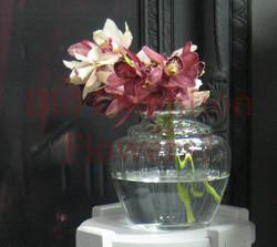 12 - Mini Cymbidum Orchids