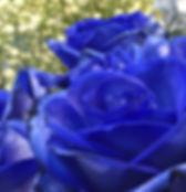 bluerose01.jpg