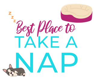 Virtual Puppy Competition-03.png