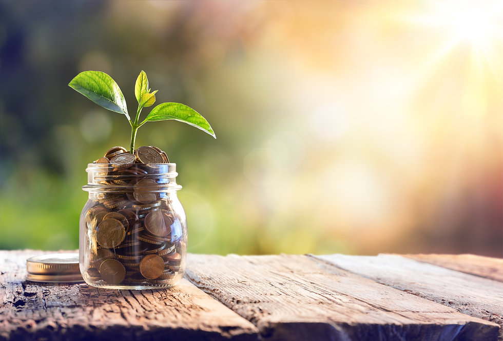 Plant Growing In Savings Coins - Investm
