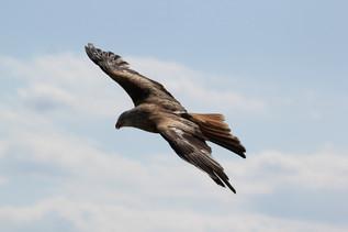 Zwei Flügel zu immer größer werdender Freiheit