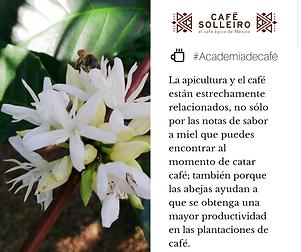 Café Solleiro