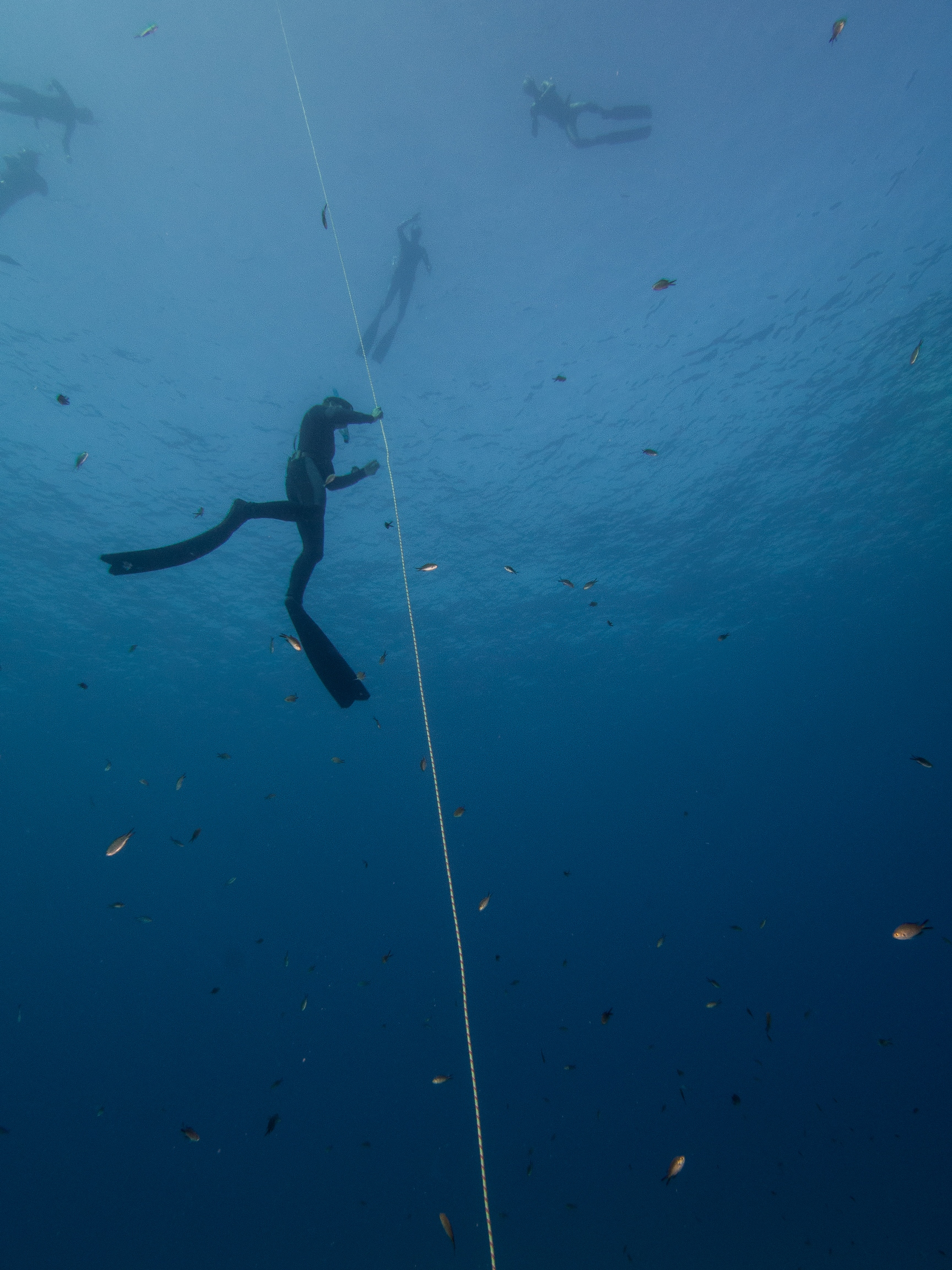 Freediving Malta