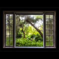Room with a View-Selby Gardens