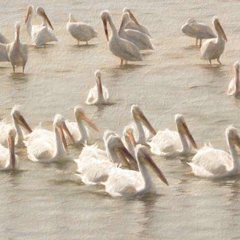Painterly Pelicans