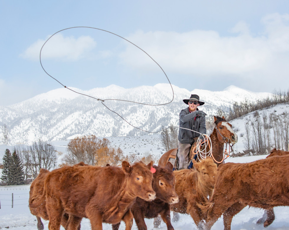 Red Calves