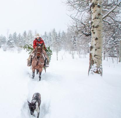 Skye snow with dog