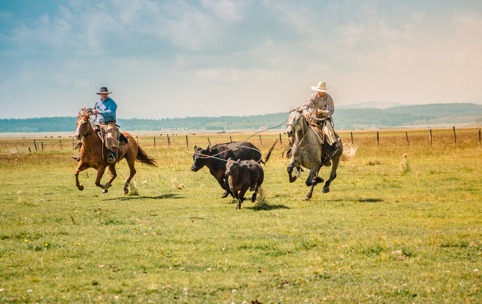 Pasture Roping