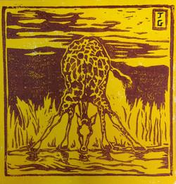 Girafe buvant - Brun et jaune