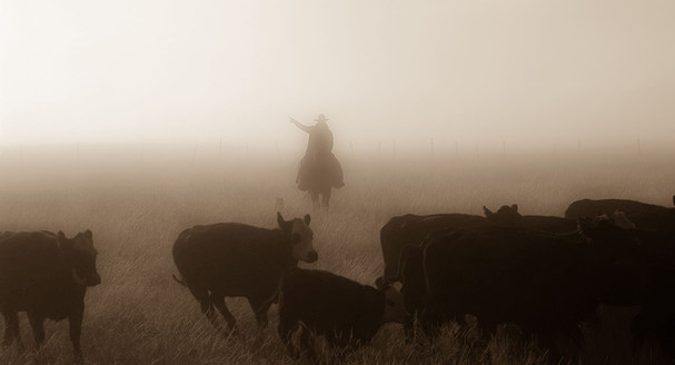 Sending dogs in the fog