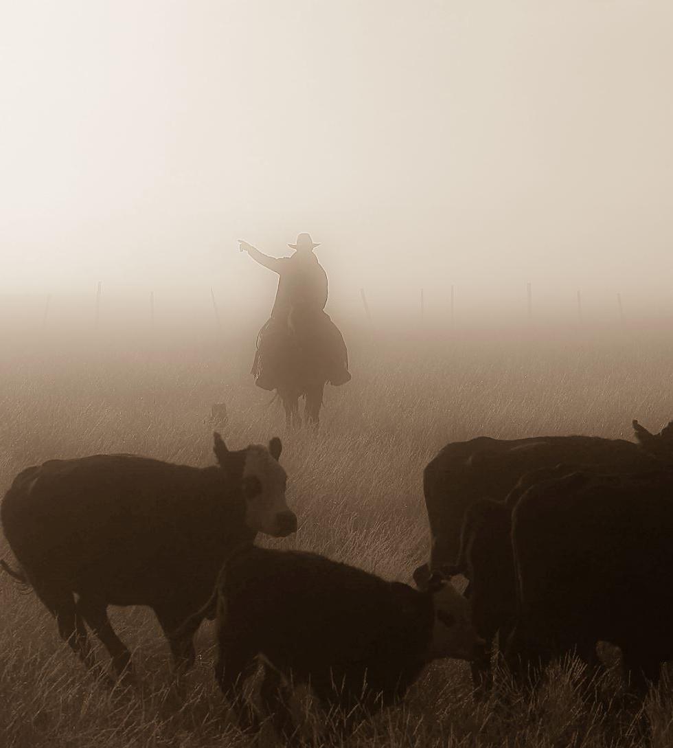 Sending dogs in the fog.jpg