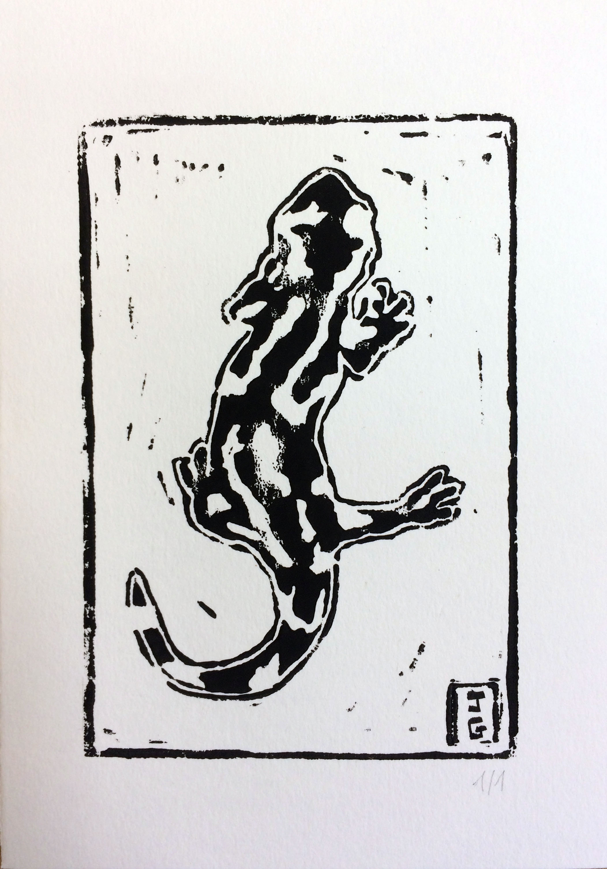 Salamandre N&B
