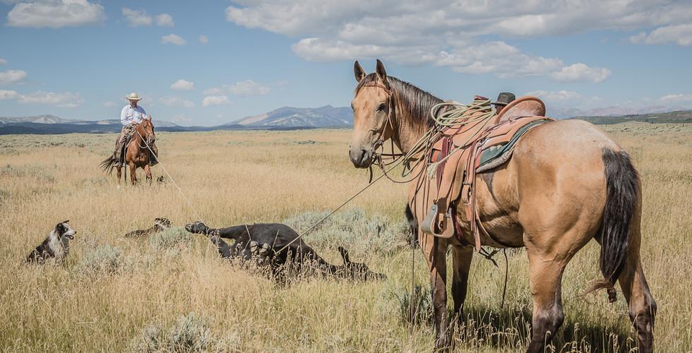 Jak's colt bucking-9404.jpg